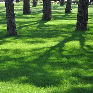 Schattenrasen
